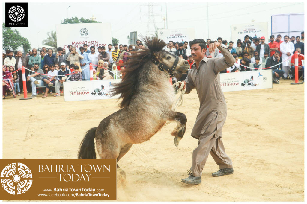 Bahria Town Hosted Pet Show 2017 at Bahria Town Karachi (11)