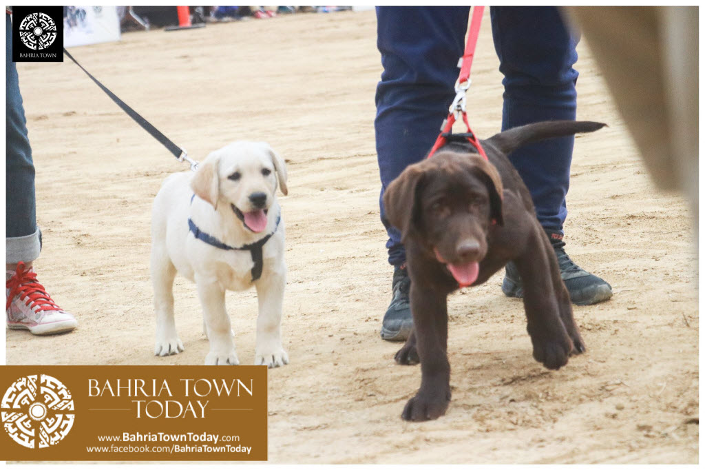 Bahria Town Hosted Pet Show 2017 at Bahria Town Karachi (12)