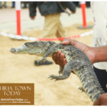 Bahria Town Hosted Pet Show 2017 at Bahria Town Karachi