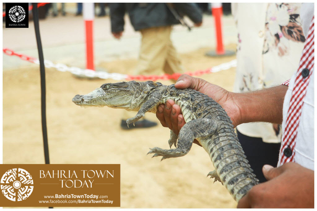 Bahria Town Hosted Pet Show 2017 at Bahria Town Karachi (9)